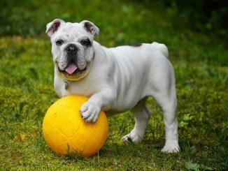 hund_med_bold